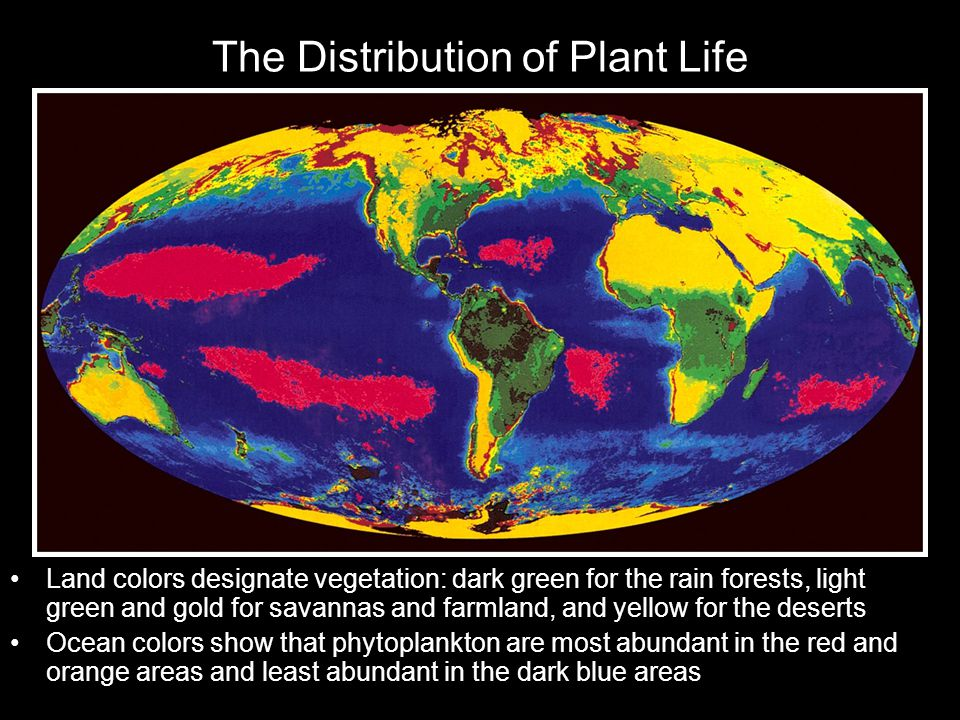 The Distribution of Plant Life