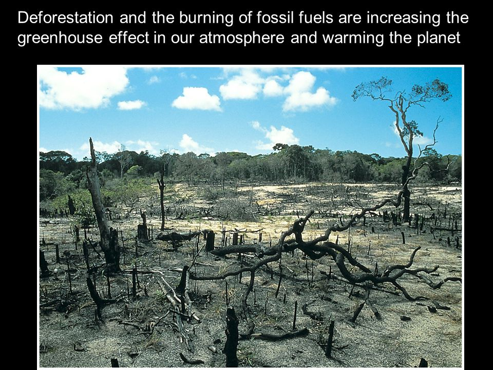 Deforestation and the burning of fossil fuels are increasing the greenhouse effect in our atmosphere and warming the planet