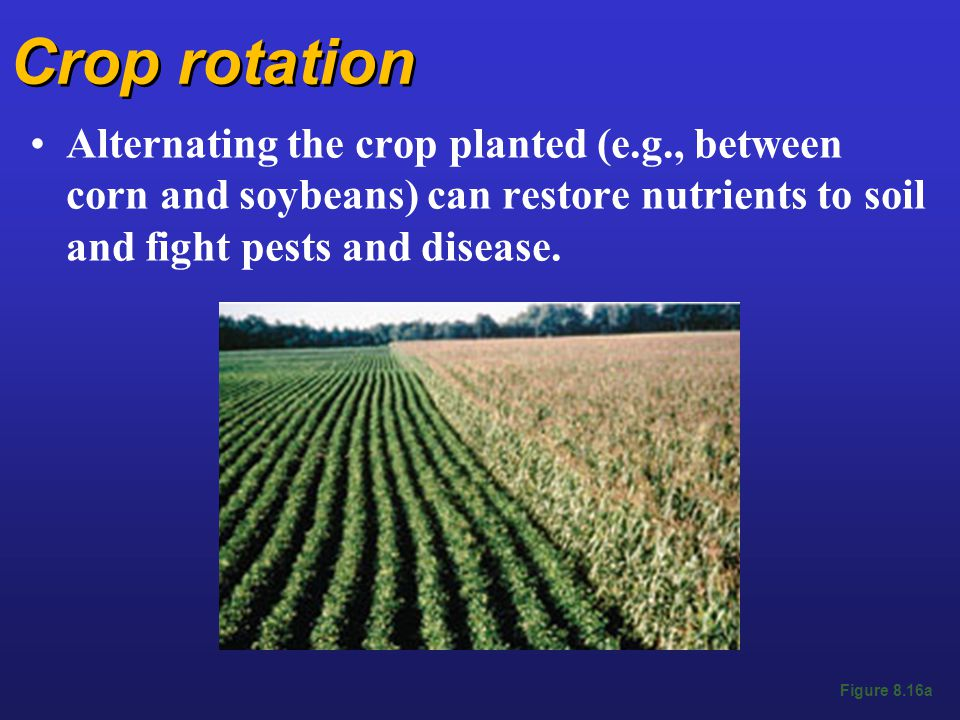 Crop rotation Alternating the crop planted (e.g., between corn and soybeans) can restore nutrients to soil and fight pests and disease.