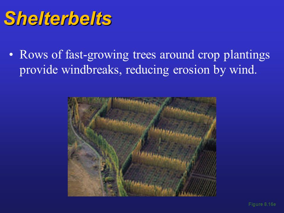 Shelterbelts Rows of fast-growing trees around crop plantings provide windbreaks, reducing erosion by wind.
