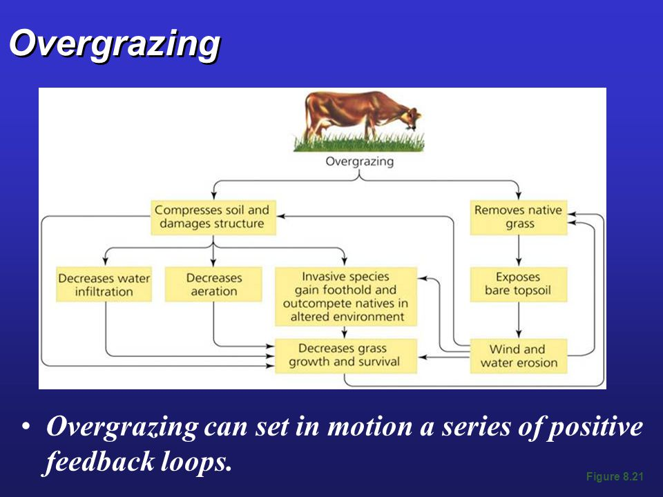 Overgrazing Overgrazing can set in motion a series of positive feedback loops. Figure 8.21