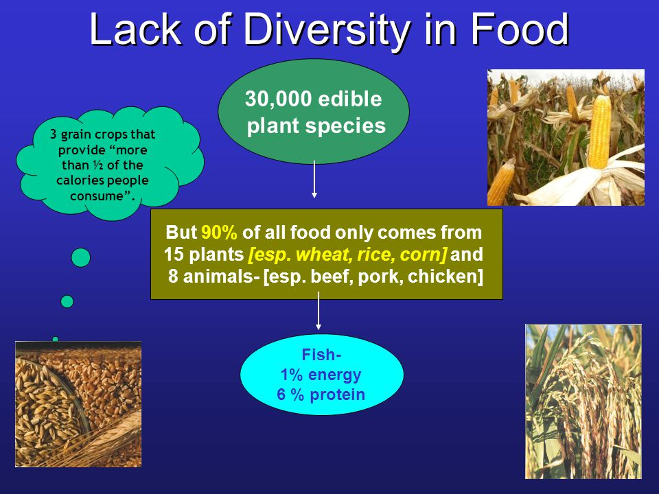 Lack of Diversity in Food