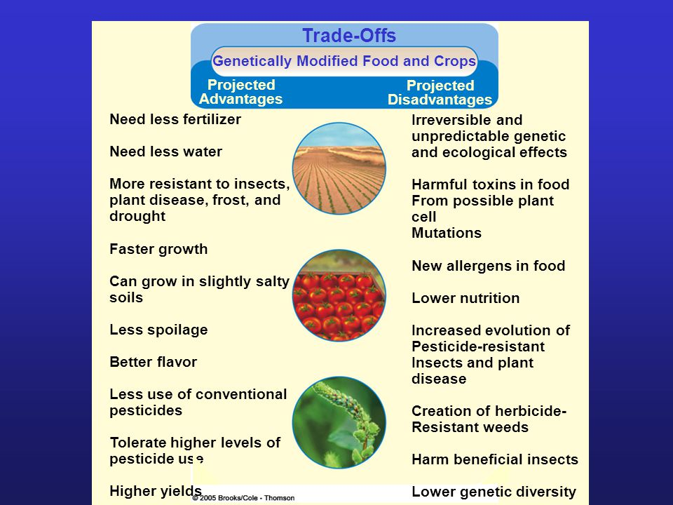 Genetically Modified Food and Crops