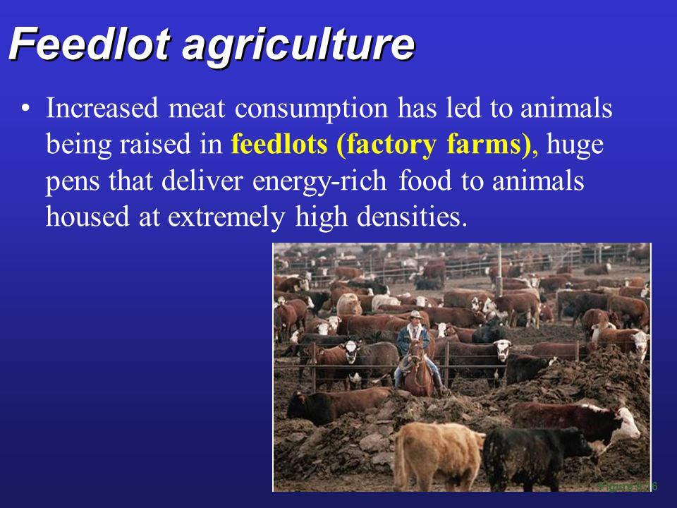 Feedlot agriculture