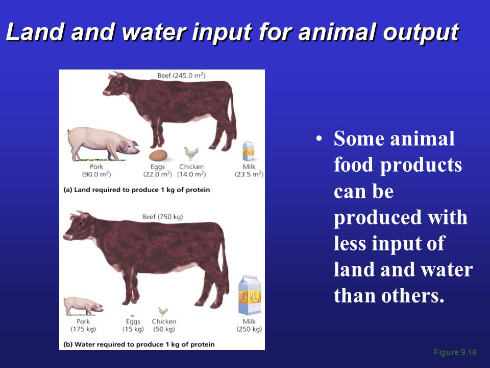 Land and water input for animal output