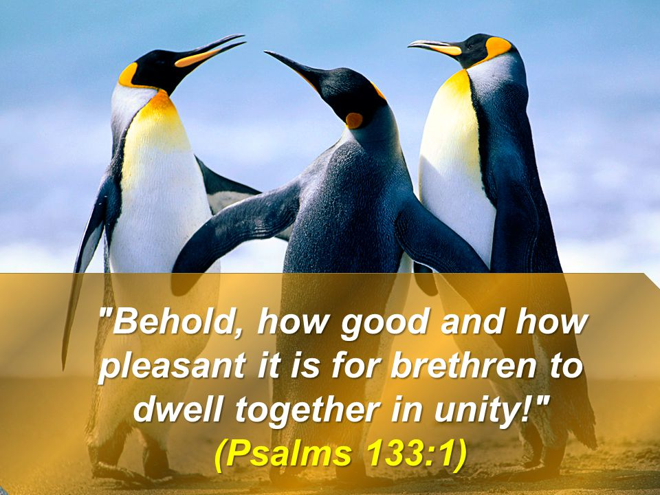 Behold, how good and how pleasant it is for brethren to dwell together in unity!