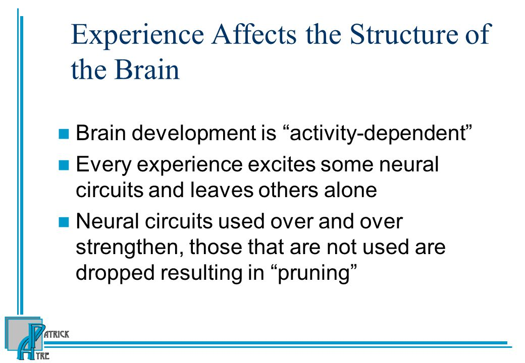 Experience Affects the Structure of the Brain