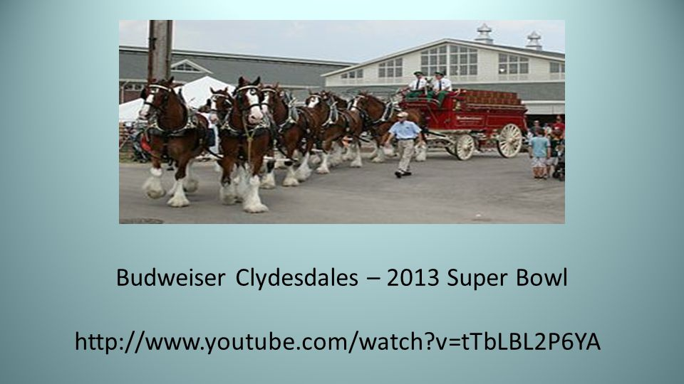 Budweiser Clydesdales – 2013 Super Bowl