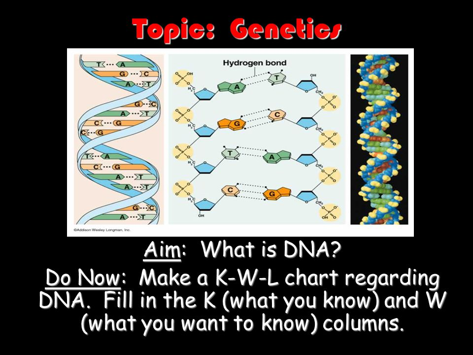 Topic: Genetics Aim: What is DNA