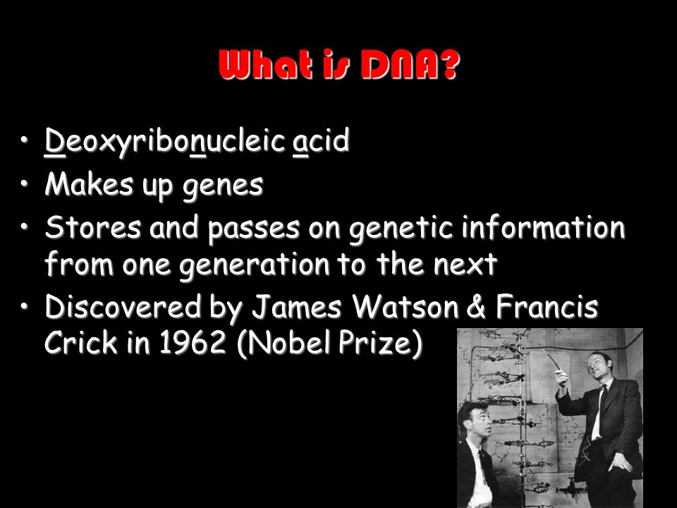 What is DNA Deoxyribonucleic acid Makes up genes