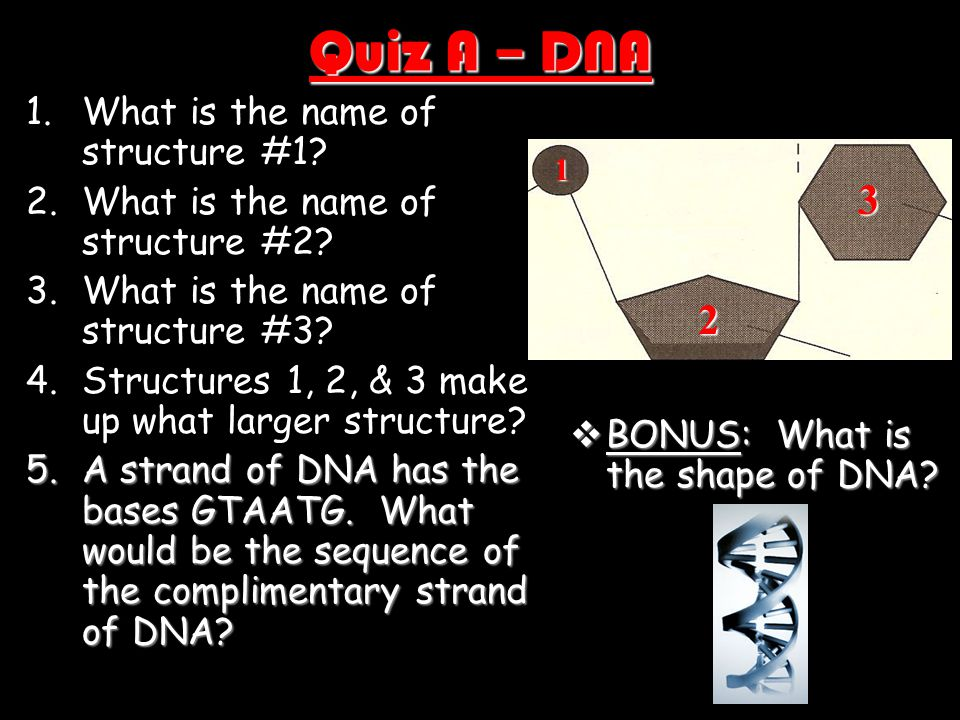 Quiz A – DNA 3 2 What is the name of structure #1