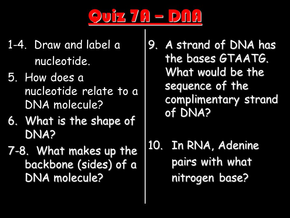 Quiz 7A – DNA 1-4. Draw and label a nucleotide.