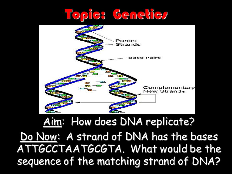 Aim: How does DNA replicate