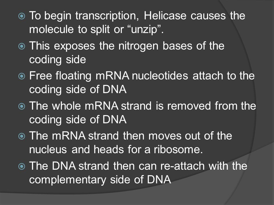 To begin transcription, Helicase causes the molecule to split or unzip .