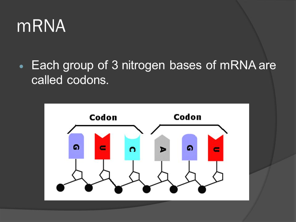 mRNA Each group of 3 nitrogen bases of mRNA are called codons.