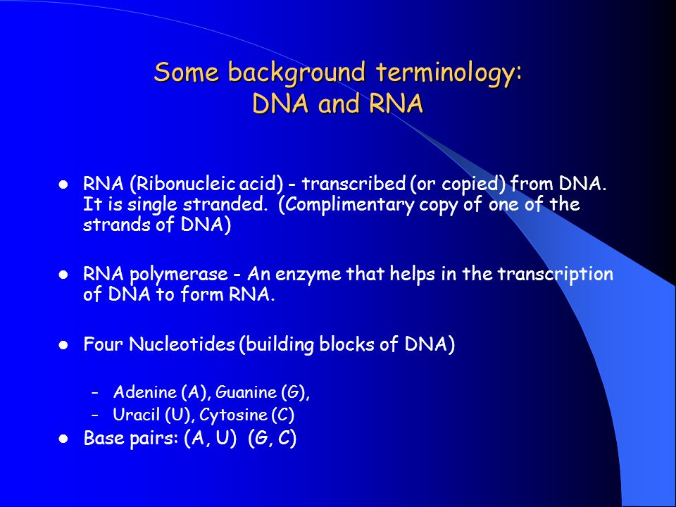 Some background terminology: DNA and RNA