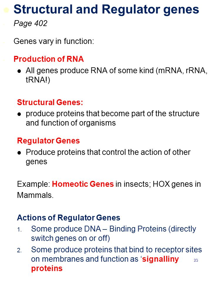 Structural and Regulator genes
