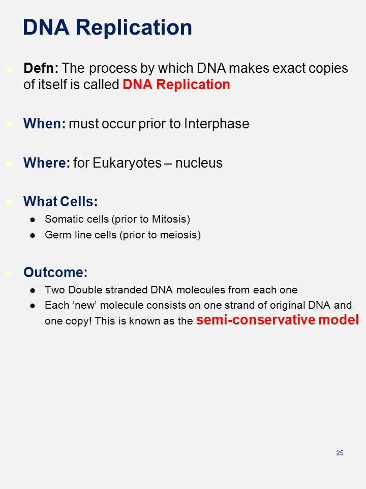 DNA Replication Defn: The process by which DNA makes exact copies of itself is called DNA Replication.