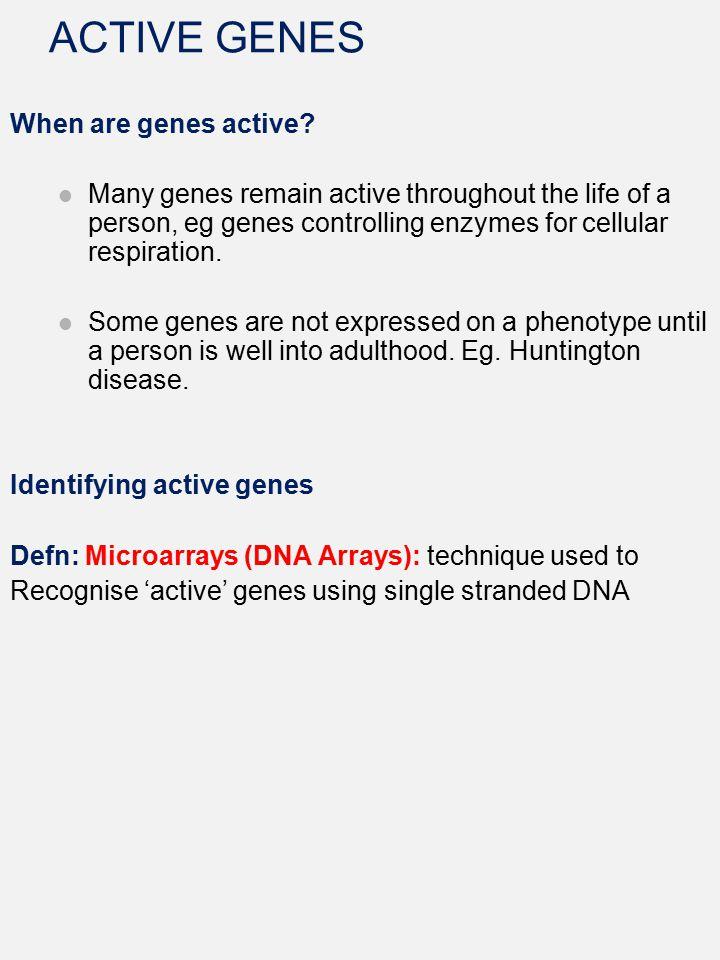 ACTIVE GENES When are genes active
