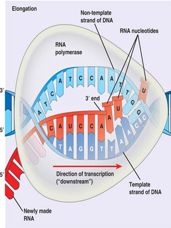 Chapter 11 Gene Function