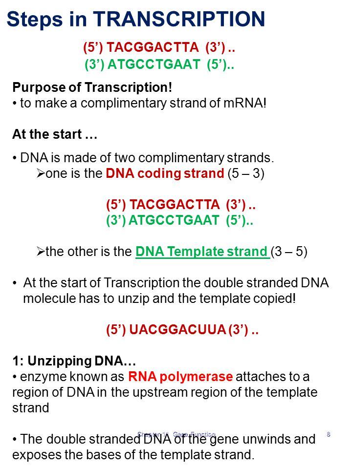 Steps in TRANSCRIPTION (5') TACGGACTTA (3') .. (3') ATGCCTGAAT (5')..