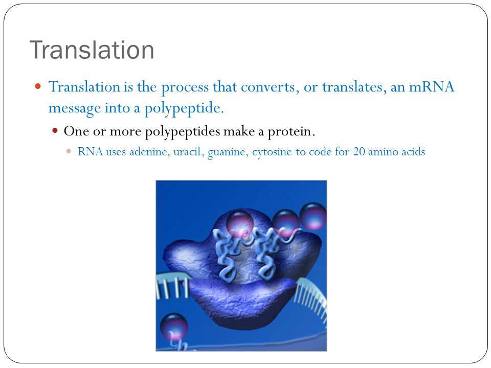 Translation Translation is the process that converts, or translates, an mRNA message into a polypeptide.
