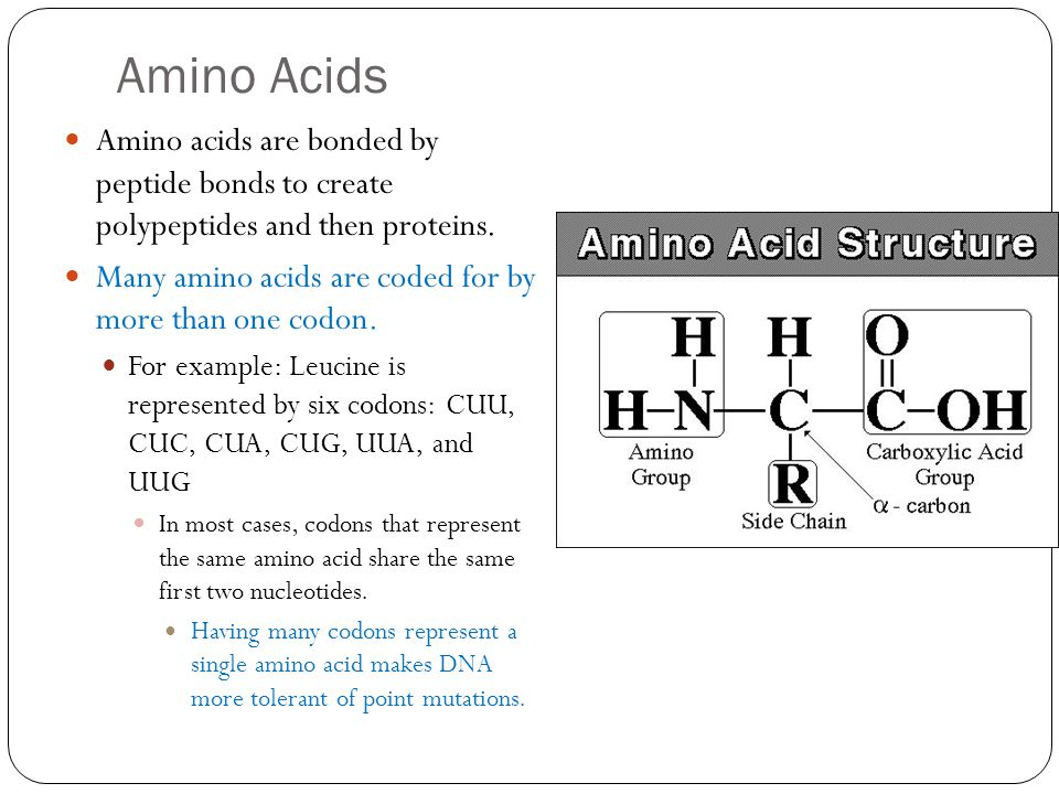 Amino Acids Amino acids are bonded by peptide bonds to create polypeptides and then proteins.