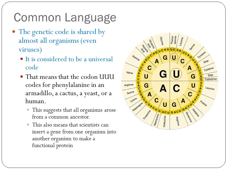 Common Language The genetic code is shared by almost all organisms (even viruses) It is considered to be a universal code.