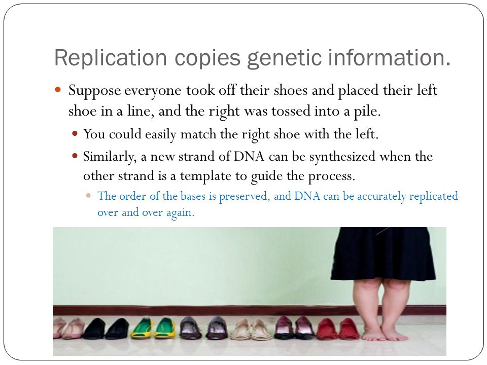 Replication copies genetic information.