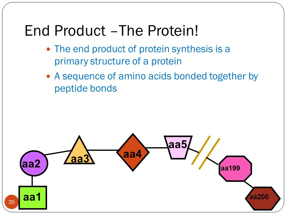 End Product –The Protein!
