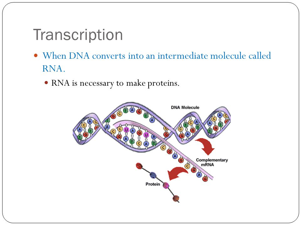 Transcription When DNA converts into an intermediate molecule called RNA.