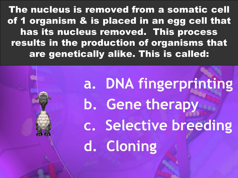a. DNA fingerprinting b. Gene therapy c. Selective breeding d. Cloning