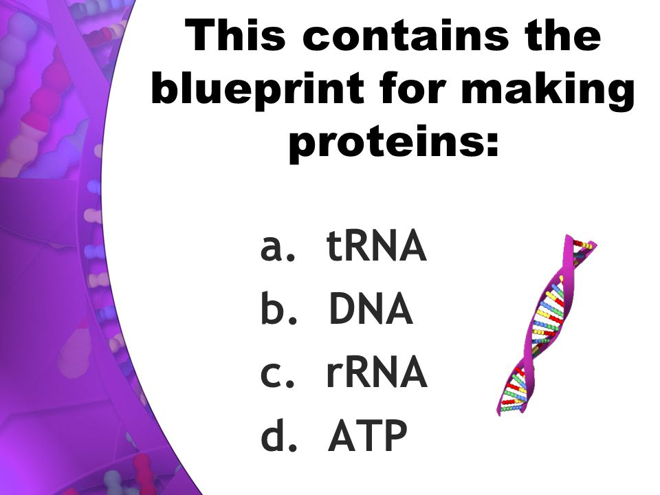 This contains the blueprint for making proteins: