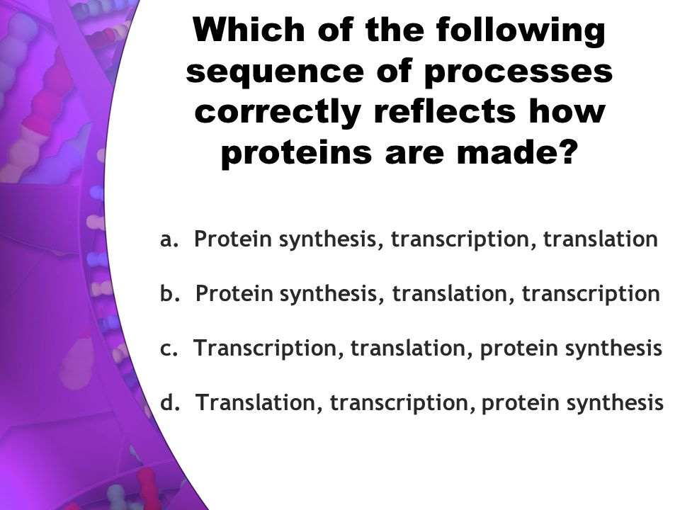 Which of the following sequence of processes correctly reflects how proteins are made