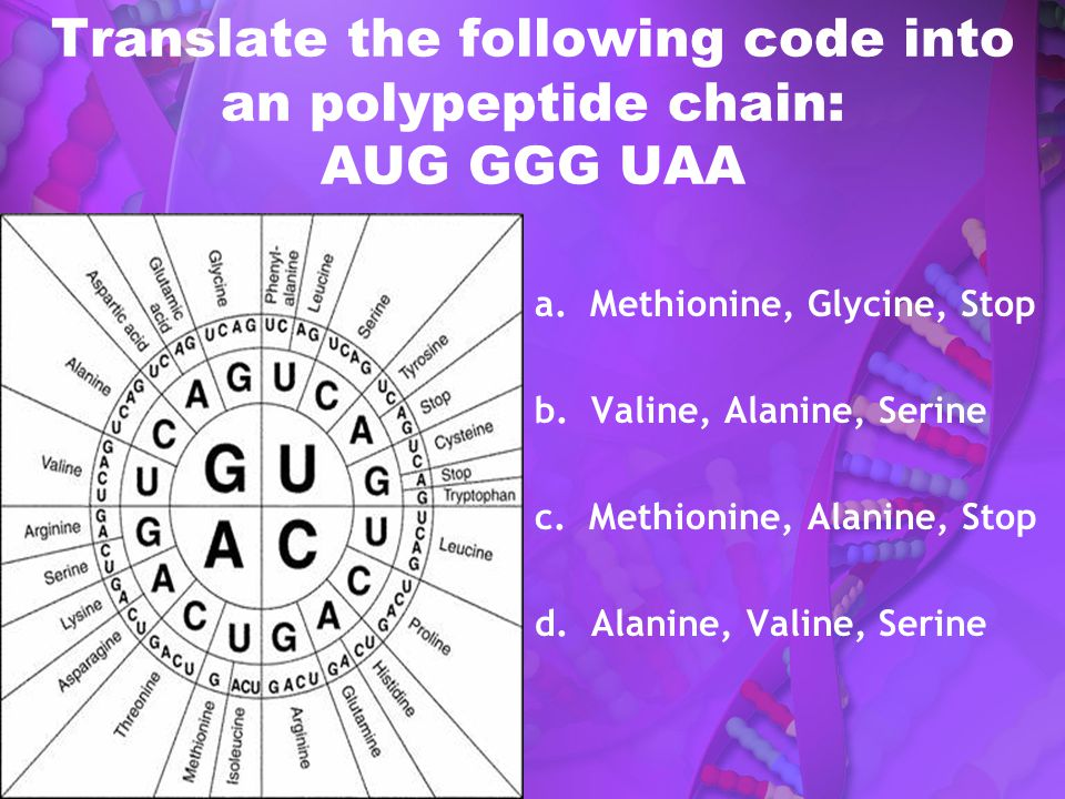 Translate the following code into an polypeptide chain: AUG GGG UAA