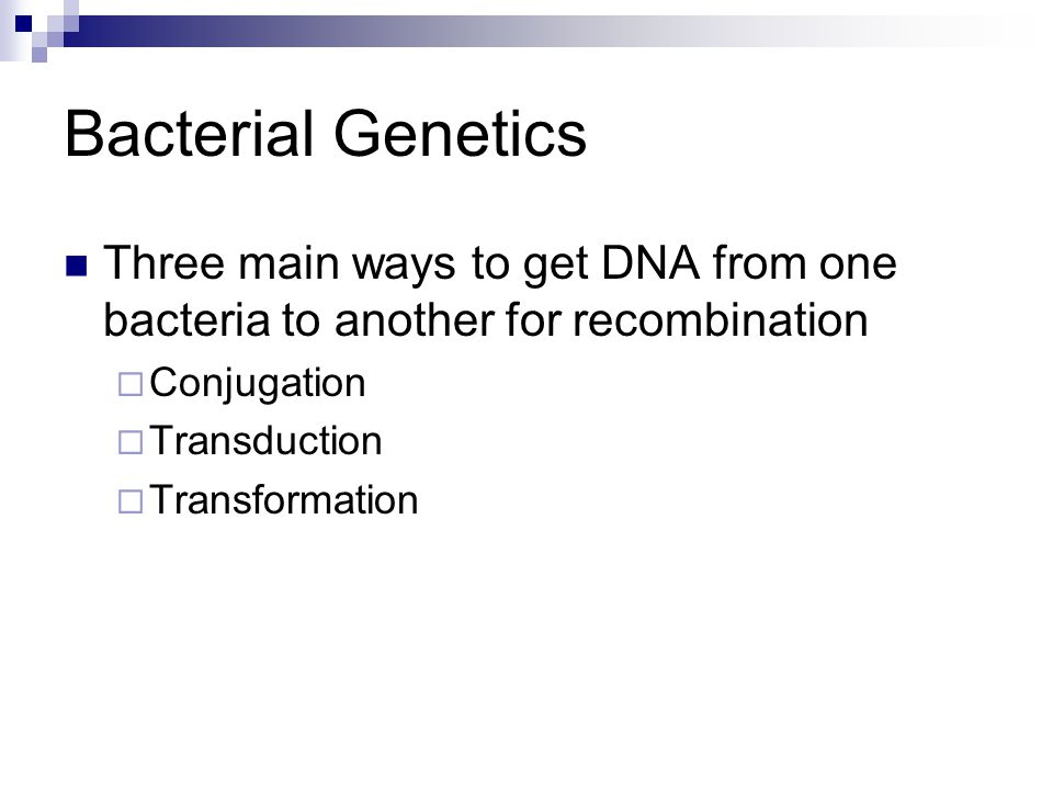 Bacterial Genetics Three main ways to get DNA from one bacteria to another for recombination. Conjugation.