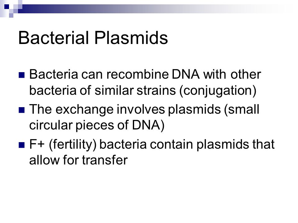 Bacterial Plasmids Bacteria can recombine DNA with other bacteria of similar strains (conjugation)