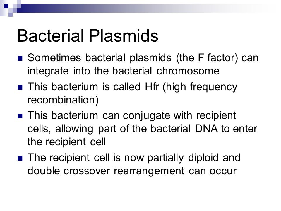 Bacterial Plasmids Sometimes bacterial plasmids (the F factor) can integrate into the bacterial chromosome.