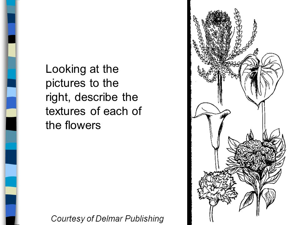 Looking at the pictures to the right, describe the textures of each of the flowers