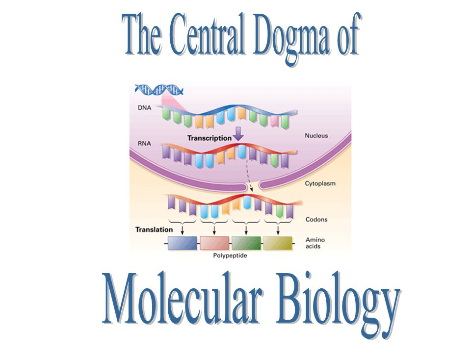 The Central Dogma of