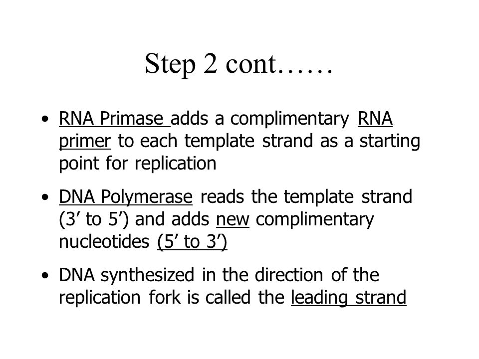 Step 2 cont…… RNA Primase adds a complimentary RNA primer to each template strand as a starting point for replication.
