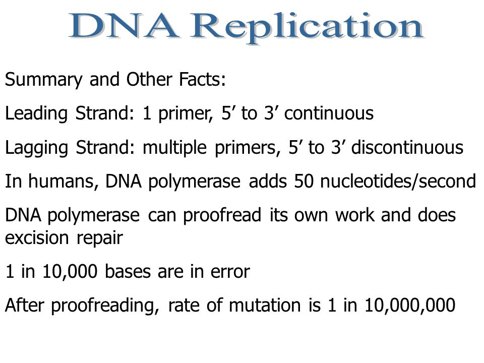 DNA Replication Summary and Other Facts: