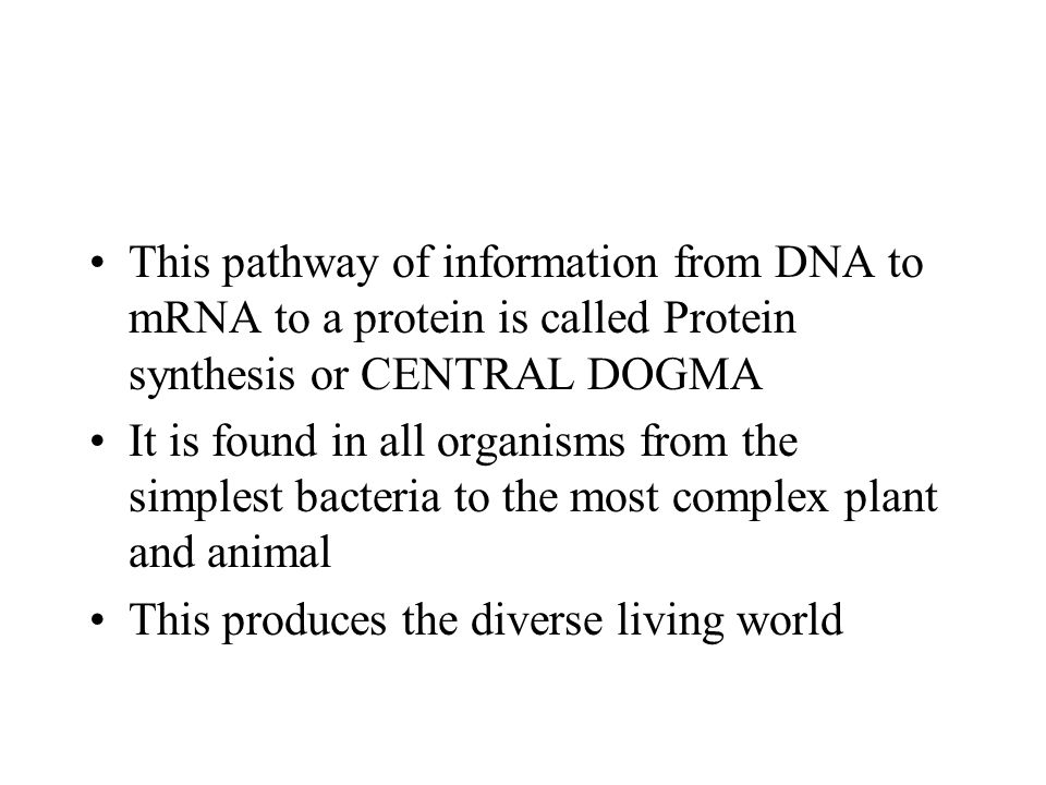 This pathway of information from DNA to mRNA to a protein is called Protein synthesis or CENTRAL DOGMA