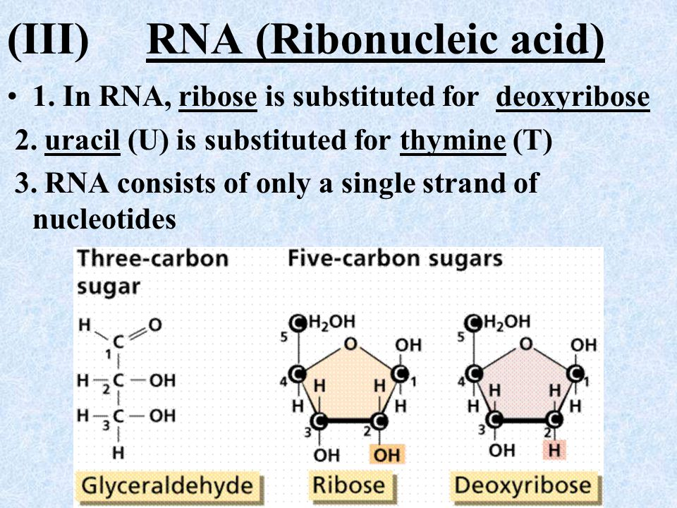 (III) RNA (Ribonucleic acid)