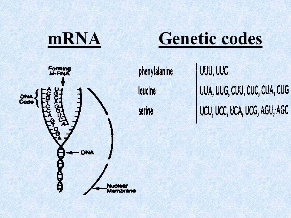 mRNA Genetic codes
