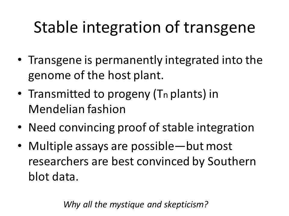Stable integration of transgene