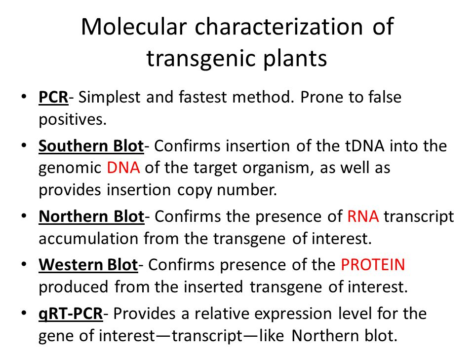 Molecular characterization of transgenic plants