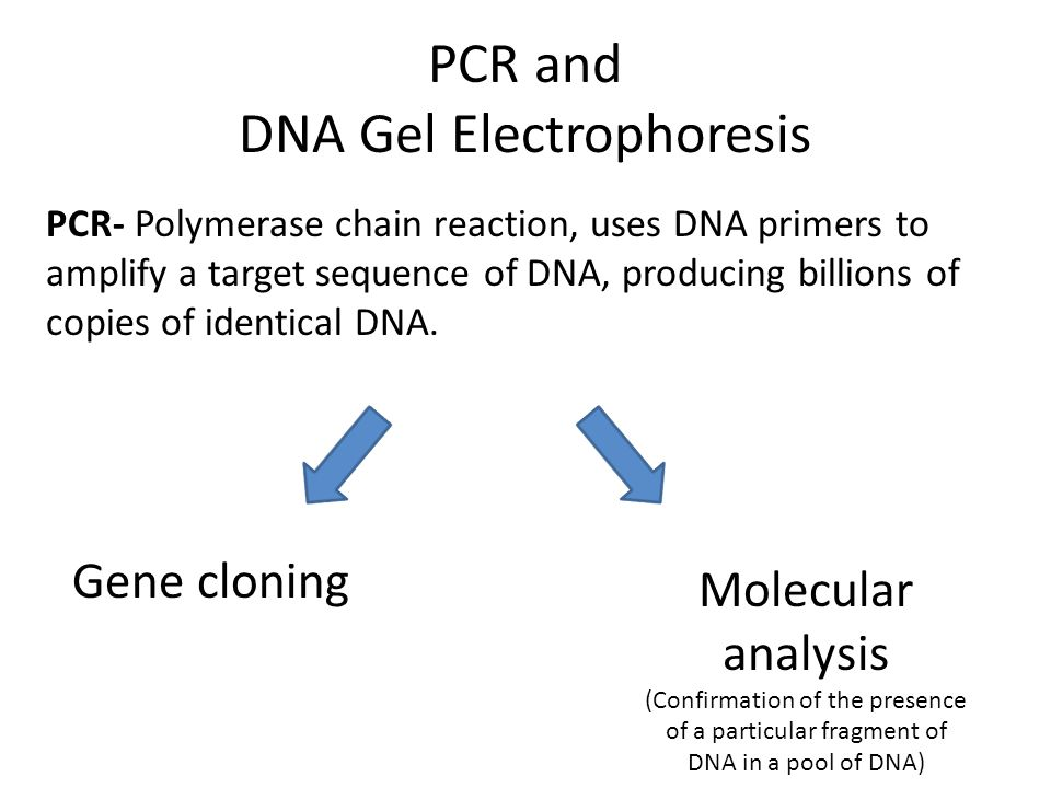 PCR and DNA Gel Electrophoresis