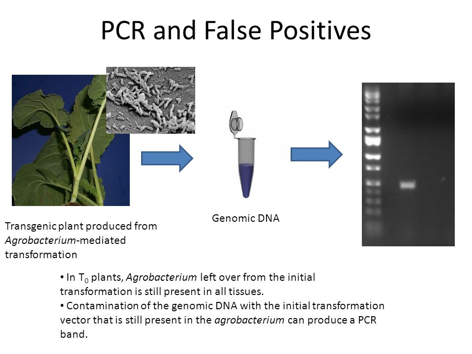 PCR and False Positives
