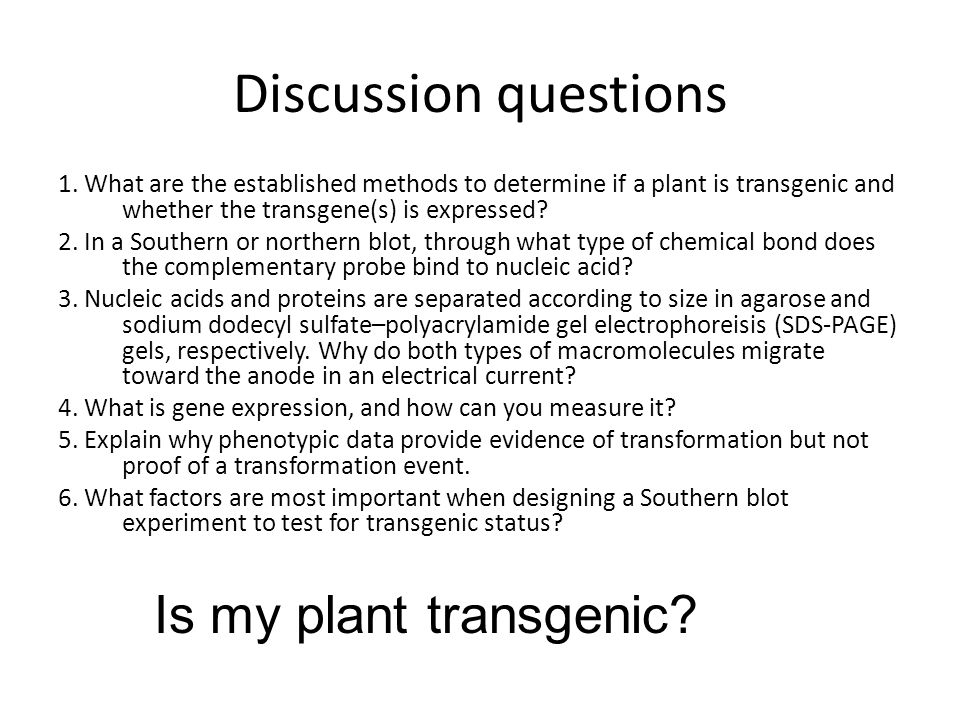 Discussion questions Is my plant transgenic